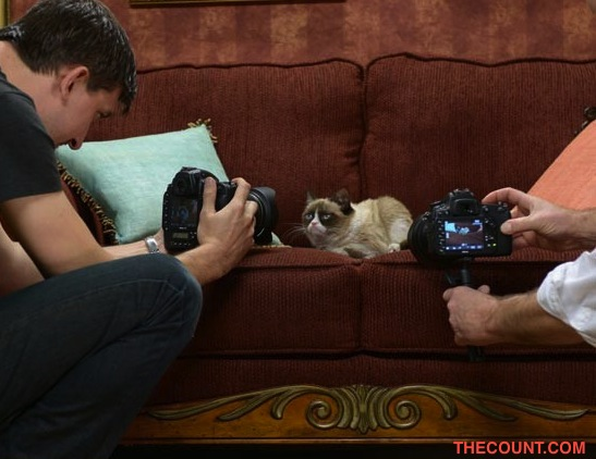0307 grumpy cat sub 3 Grumpy Cat Gets Own Agent Scores 5 Figure Contract With Friskies