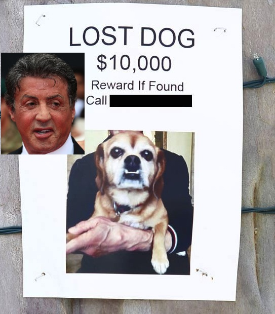 0425 sylvester stallone fame 3 Sylvester Stallone $10,000 REWARD Lost Pooch Found KILLED By Coyotes!