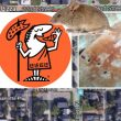 Indy Little Caesars Pizza Parlor Shuttered After Mouse Poop Found Cooked Into Crust