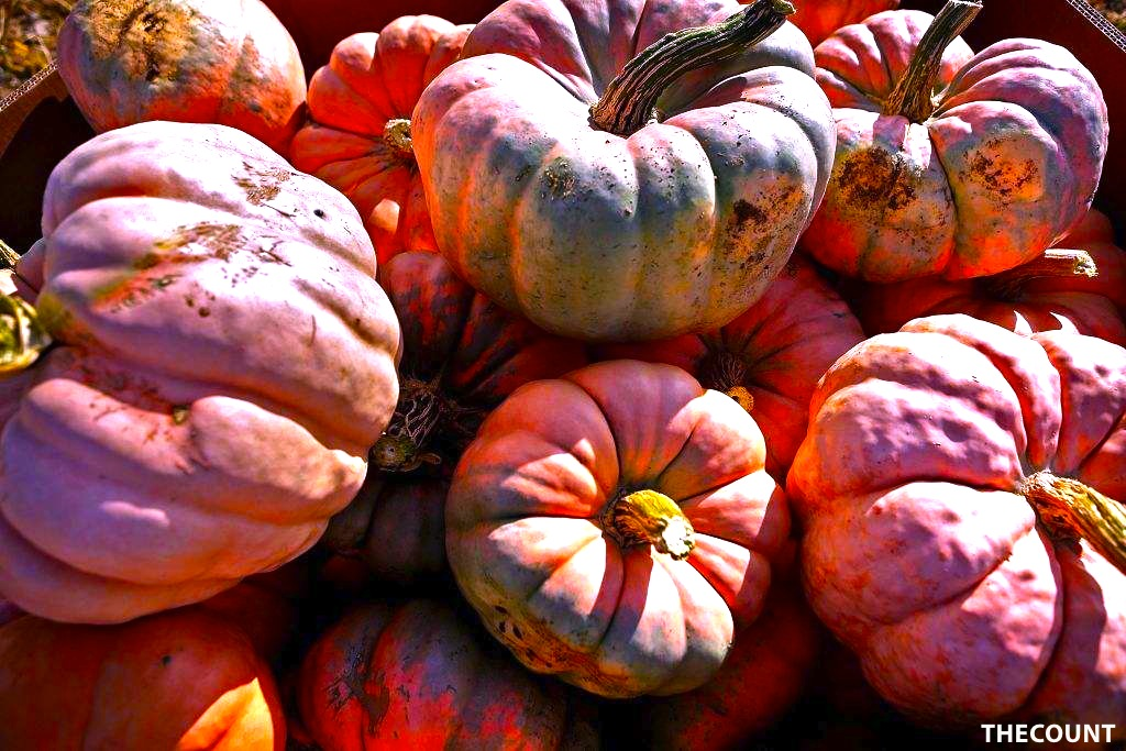 3Pink1006 Farmer Grows Amazing PINK PUMPKINS! For A Great Cause