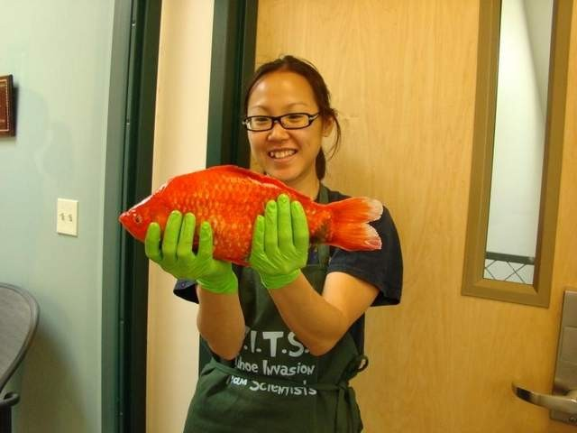 54217-monster-goldfish-found-in-lake-tahoe-threat-to-native-species