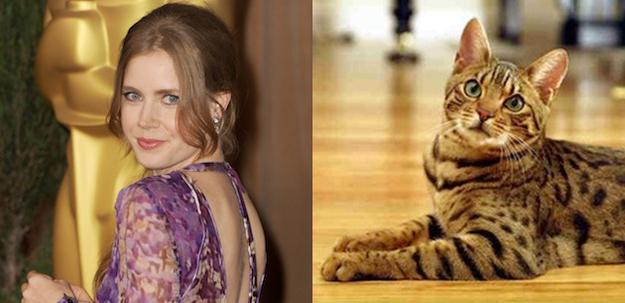 Amy Adams Bengal Cat