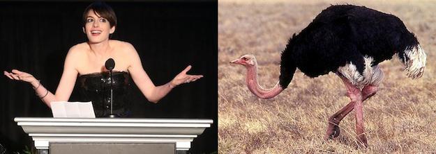 Anne Hathaway Ostrich