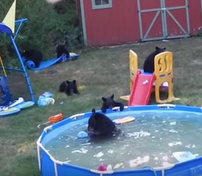 Bears take over Rockaway Township pool 3