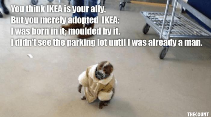 Best of Ikea Monkey the Meme1 Invasion Of The Ikea Monkey Meme!