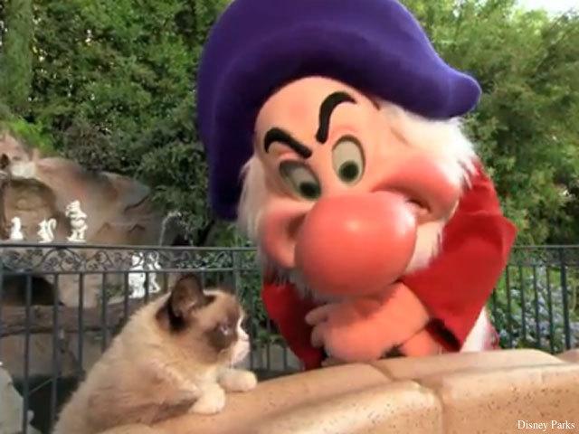 GRUMPY cat meets real grumpy