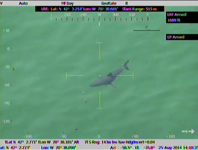 Great White Shark Prompts Massachusetts Beach Closure 400x304 MONSTER Great White Shark Prompts Massachusetts Beach Closure