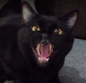 Incredible Singing Cat