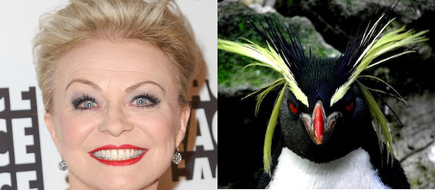 Jackie Weaver  Penguin