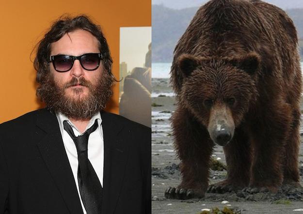 Joaquin Phoenix Bear