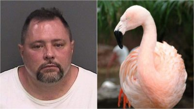 Joseph Corrao attacked Pink flamingo