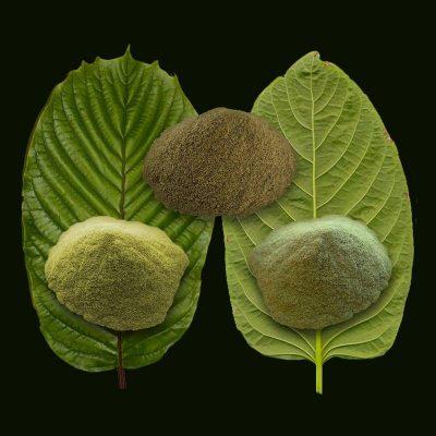 Kratom Leaf dea ban