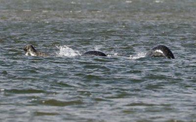 loch-ness-monster-nessie-seals