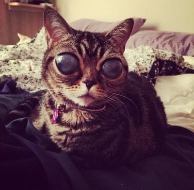 Matilda alien cat eyes 4