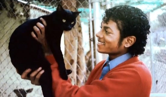 MichaelJackson BlackCat This Is REALLY IT! Michael Jackson Wrongful Death Trial Opening Statements TODAY