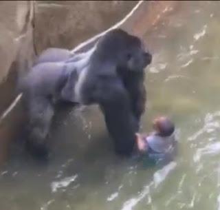 Gorillan har fatt en supernanny