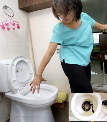 Noraslinda Asat snake toilet