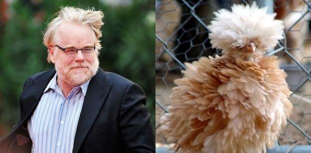 Philip Seymour Hoffman Fluffy Chicken