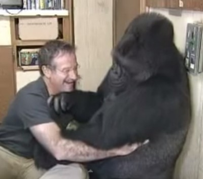 Robin Williams has a tickle fight with Gorilla 3