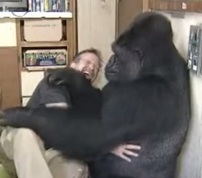 Robin Williams has a tickle fight with Gorilla