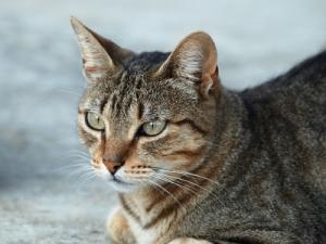 Serial CAT KILLER Striking Houston 2