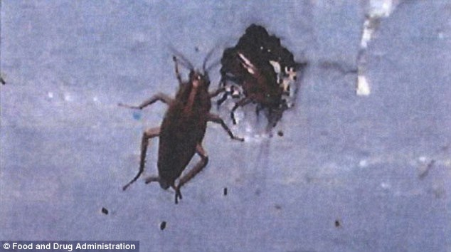 article 0 1613BE1F000005DC 635 634x354 AIRLINE FOOD REVEALED: Mice, Roaches, Ants and Feces