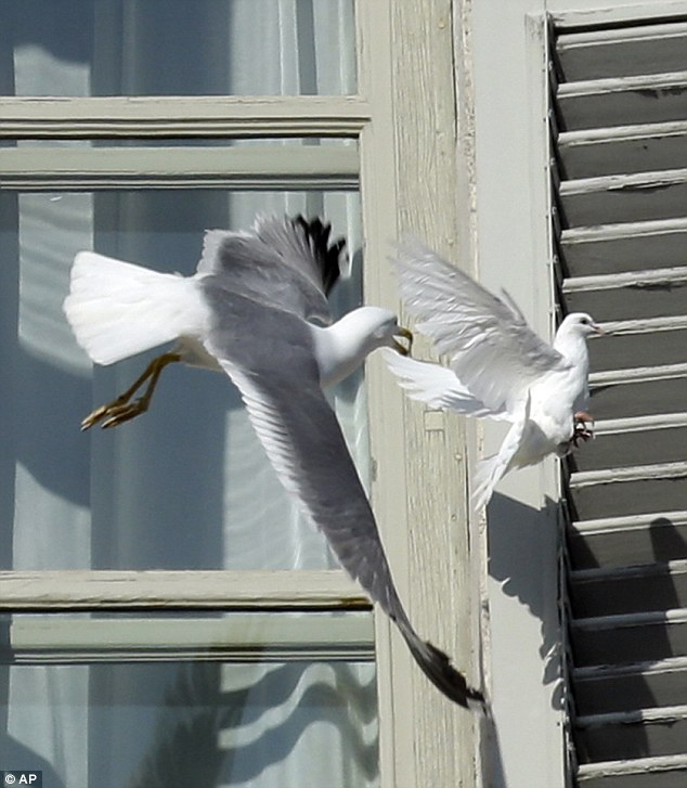 article 2269255 17320D6E000005DC 6 634x727 Pope Releases Dove Of Peace Immediately Attacked By Seagull (photos)