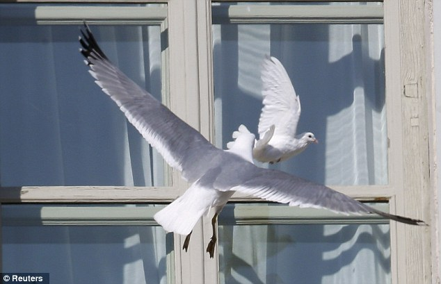 article 2269255 1732376D000005DC 601 634x409 Pope Releases Dove Of Peace Immediately Attacked By Seagull (photos)