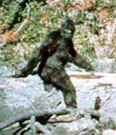 bigfoot-bewijspic-3
