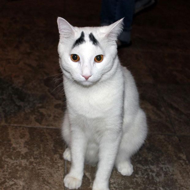 cat-eeybrows-sitti_2474711k