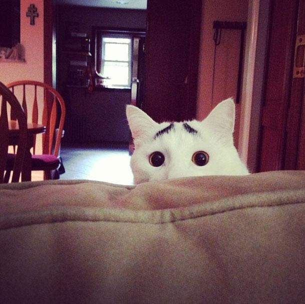 cat-eyebrows-peeki_2474716k