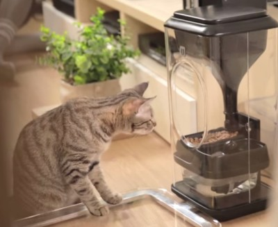cat facial-recognition feeder