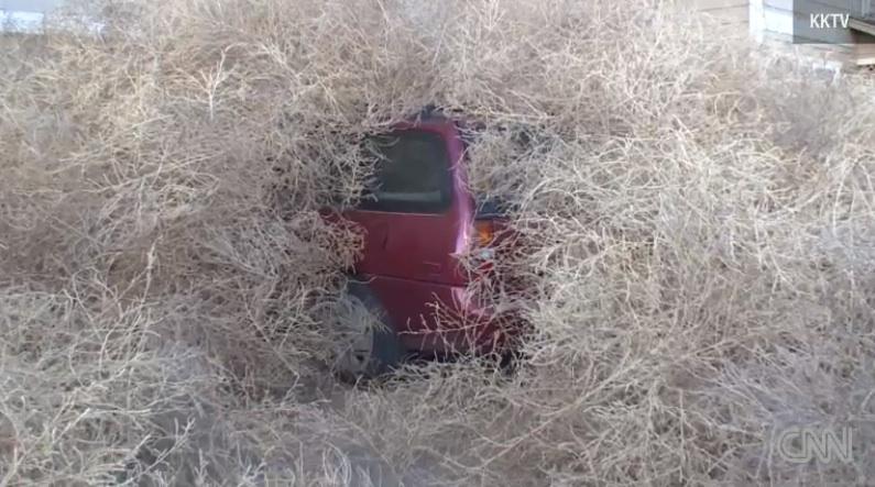 colorado tumbleweeds