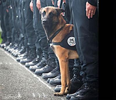 diesel paris raids 400x345 R.I.P. Diesel Police Dog Killed By ISIS In Paris Raid