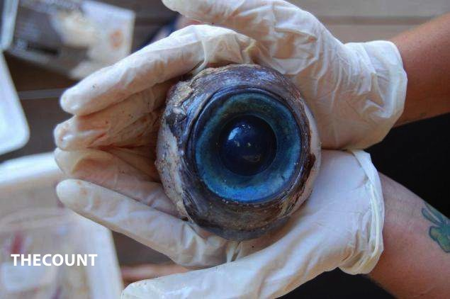 eye13n 2 web MYSTERY! HUGE EYEBALL Washes Up On Florida Beach