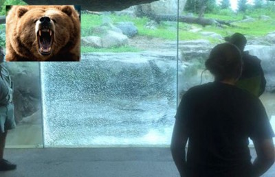 grizzly bear smashes window minnesota zoo 400x258 RISE OF THE ANIMALS: Grizzly Bear Uses ROCK To Smash Zoo Window