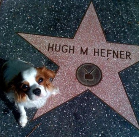 harris dog hollywood blvd star hefner
