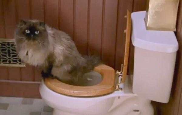 jinxy-cat-toilet