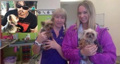 johnny depp dogs euthanized Australia