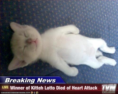 kitten lotto