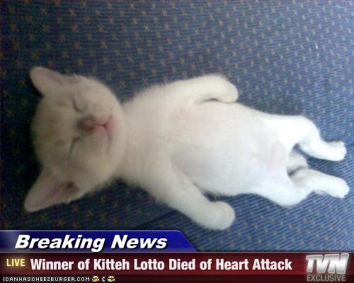 kitten lotto LOTTO WINNER MEETS LOVE 2 DAYS AFTER WIN!