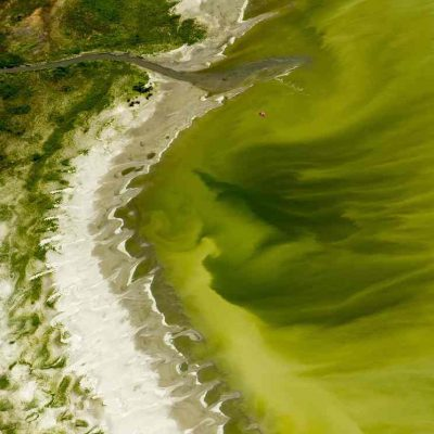 lake utal algee bloom update 1 400x400 Utah Lake Toxic Algae Bloom Sickens 130 Leaves Farmers Scrambling For Fresh Water