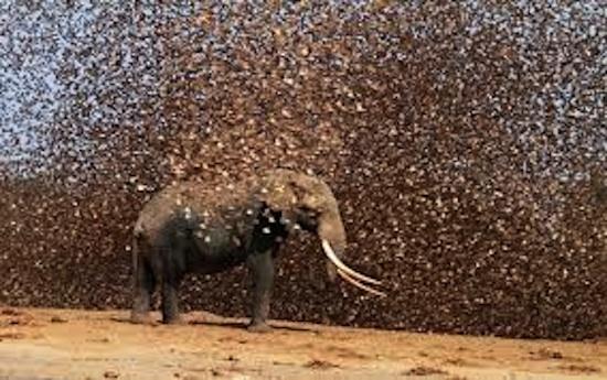locust Cue The Locusts