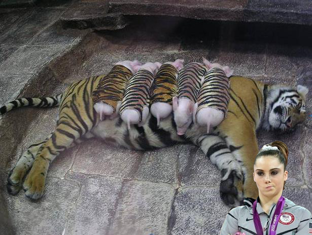 http://thecount.com/wp-content/uploads/mckayla-maroney-meme.png