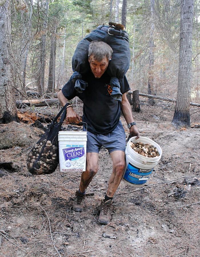 mushrooms Washington hunt