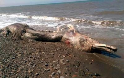 mysterious sea creature russia