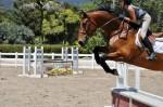 noah cyrus horse