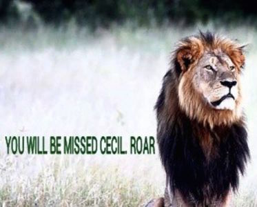 petition for cecil the lion Justice For CECIL Petition Receives Over 420,000 Signatures