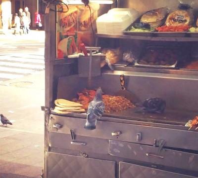 pigeons eating at street cart nyc