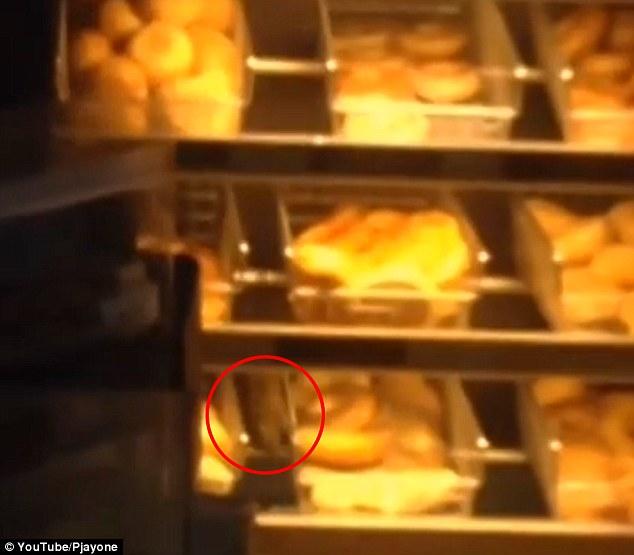 rat dunkin donuts